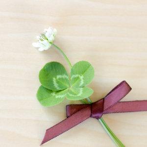四葉のクローバーとシロツメクサ|ウェディングムービーchouchou(シュシュ)